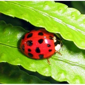 photo of a ladybug for Amazon strange products