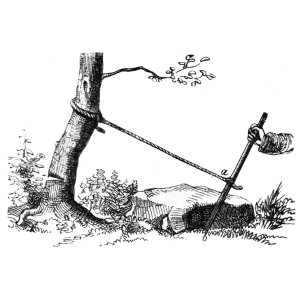 Picture of a lever pulling on a cut tree